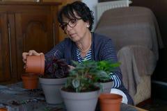 Planta casera de la casa que vuelve a poner que cultiva un huerto Fotografía de archivo
