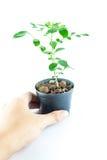 Planta casera en pote imagen de archivo libre de regalías