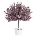 Planta casera púrpura hermosa Foto de archivo libre de regalías