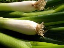 Planta cebollas Foto de archivo