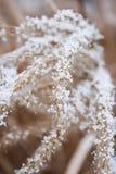 Planta coberta com a neve Imagem de Stock Royalty Free