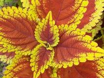 Planta colorida Foto de Stock Royalty Free