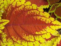 Planta colorida Fotografia de Stock Royalty Free