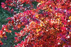 Planta colorida Foto de Stock