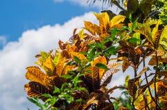 Planta colorida no fundo do céu Imagem de Stock