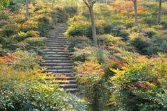 Planta colorida y pequeño camino Fotografía de archivo