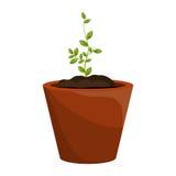 Planta com as folhas que crescem gráficas Fotos de Stock