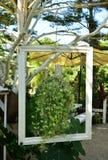 A planta com o quadro branco imagens de stock royalty free