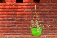 Planta com a parede do tijolo e do almofariz Imagem de Stock
