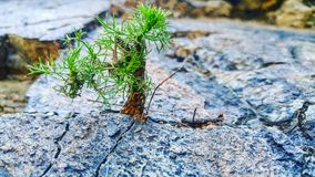 planta com pedra Imagem de Stock Royalty Free