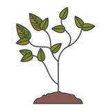 Planta com projeto das folhas Fotos de Stock