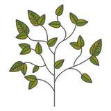 Planta com projeto das folhas Imagem de Stock