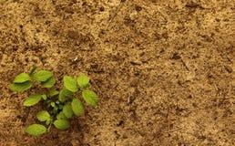 Planta com solo Foto de Stock
