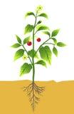 Planta con el crisol Imagen de archivo