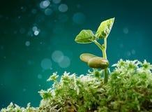 Planta con el musgo Foto de archivo