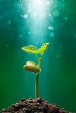 Planta con el rayo de sol Imagen de archivo libre de regalías