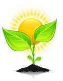 Planta con gotas y el sol