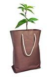 Planta con la bolsa de papel Fotografía de archivo libre de regalías
