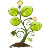 Planta con las bombillas y el enchufe Imagenes de archivo