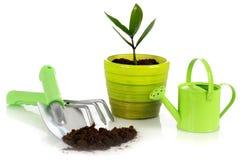 Planta con las herramientas de jardín. Foto de archivo