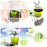 Planta con las herramientas de jardín aisladas sobre blanco. Fotos de archivo