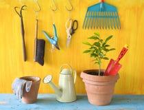 Planta con las herramientas que cultivan un huerto Foto de archivo libre de regalías