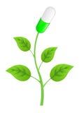 Planta con las hojas y las píldoras Imagen de archivo