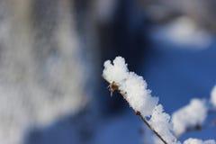 Planta con nieve Imágenes de archivo libres de regalías