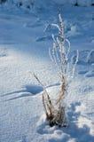 Planta congelada Foto de archivo