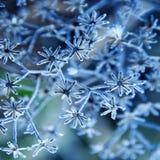 Planta congelada Fotografia de Stock