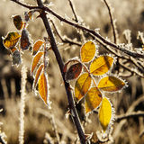 Planta congelada Foto de Stock