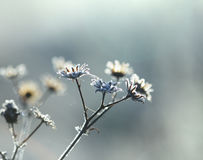 Planta congelada Imagem de Stock Royalty Free