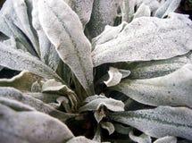 Planta congelada Fotos de Stock Royalty Free