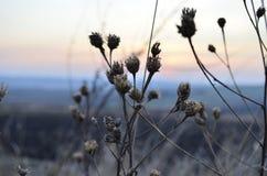 Planta congelada Foto de archivo libre de regalías