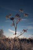 Planta congelada Fotos de archivo