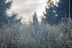 Planta congelada Fotos de archivo libres de regalías