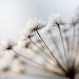 Planta congelada Imagem de Stock