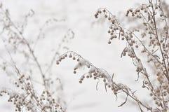 Planta congelada del invierno Imagen de archivo libre de regalías