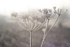 Planta congelada en salida del sol Fotografía de archivo libre de regalías