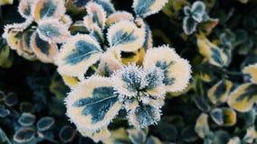 Planta congelada por la helada de tierra fotografía de archivo