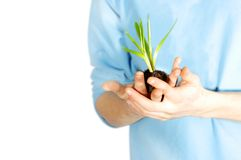 Planta consolidada sostenida cuidadosamente Fotos de archivo