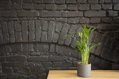 Planta contra la pared de ladrillo negra fotografía de archivo