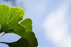 Planta contra a luz Foto de Stock