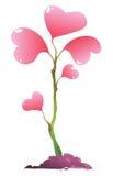 Planta cor-de-rosa Imagem de Stock