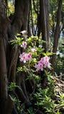 Planta cor-de-rosa da flor em um parque Fotos de Stock