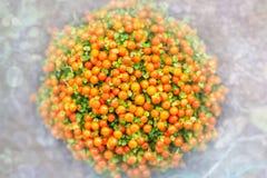 Planta coral alaranjada do grânulo do granadensis de Nertera aka no fundo defocused branco claro imagens de stock royalty free