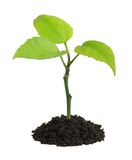 Planta creciente Foto de archivo