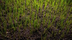 Planta creciente de la hierba verde metrajes