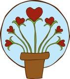 Planta creciente de los corazones Fotografía de archivo libre de regalías