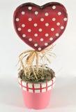 Planta creciente del corazón, día de tarjeta del día de San Valentín Fotos de archivo